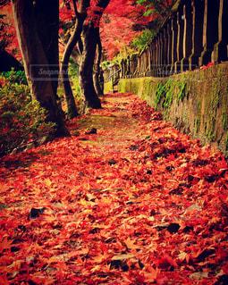 赤い絨毯の写真・画像素材[1611767]