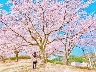 青空と桜と少女の写真・画像素材[1454135]
