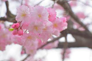 花,春,ピンク,綺麗,pink