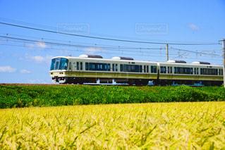 風景,電車,青空,景色,稲,米,滋賀,秋空,新米