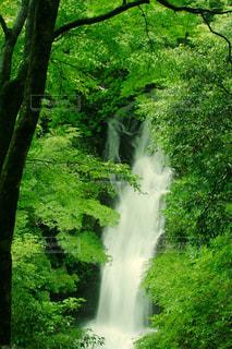 二階滝の写真・画像素材[1461129]