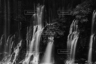 白糸の滝の写真・画像素材[1461131]
