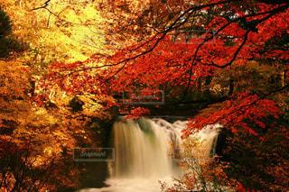 昼さがりの滝、紅葉。の写真・画像素材[1461174]