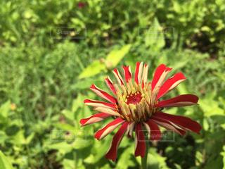 近くの花のアップの写真・画像素材[1461557]