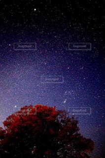 紅葉と星空。の写真・画像素材[1465947]