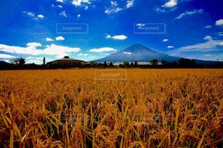 実りの秋。の写真・画像素材[1466825]