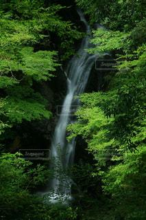 二階滝新緑。の写真・画像素材[1467619]