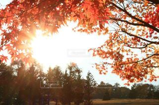 風景,秋,紅葉,秋空