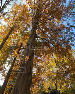 秋,カラフル,景色,秋空