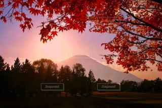秋,富士山,カラフル,景色,秋空
