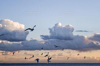海,空,鳥,雲,夕焼け,夕暮れ,海岸,カモメ,秋空,秋風