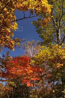 空,秋,紅葉,屋外,カラフル,青空,黄色,景色,樹木,赤色,緑色,志賀高原,色鮮やか,フォトジェニック