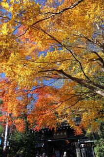 空,紅葉,京都,カラフル,綺麗,青空,黄色,景色,樹木,赤色,色鮮やか,フォトジェニック