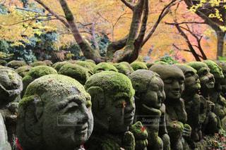 秋,紅葉,京都,美しい,樹木,苔,旅行,地蔵,フォトジェニック,愛宕念仏寺,インスタ映え,羅漢
