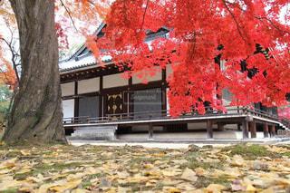 愛宕念仏寺の美しい紅葉の写真・画像素材[1603890]