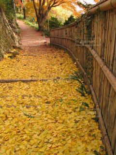 金蔵寺の紅葉の道の写真・画像素材[1603901]