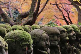 愛宕念仏寺のお地蔵さまと紅葉の写真・画像素材[1604380]