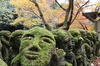 愛宕念仏寺の可愛いお地蔵さまと紅葉の写真・画像素材[1604451]