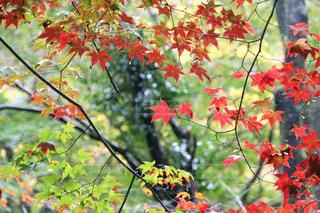 室生寺の美しい紅葉の写真・画像素材[1604635]
