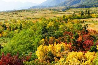 立山弥陀ヶ原の鮮やかな紅葉の写真・画像素材[1605598]