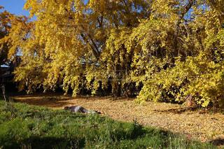 美しい落ち葉に横たわる人の写真・画像素材[1618434]