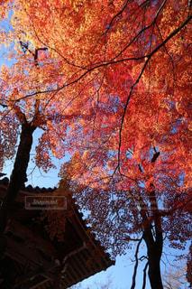 常寂光寺の趣きある紅葉の写真・画像素材[1635441]
