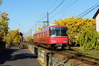黄色の紅葉と赤色の電車の写真・画像素材[1637081]