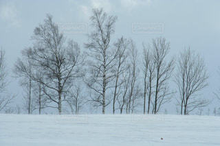 自然,冬,木,雪,白,北海道,景色,美しい,樹木,旅行,ホワイト,網走,フォトジェニック,インスタ映え
