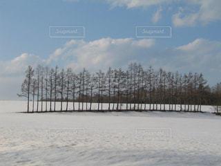 自然,風景,空,冬,木,雪,湖,白,青空,北海道,景色,美しい,樹木,旅行,ホワイト,阿寒湖,フォトジェニック,インスタ映え