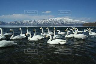 空,雪,湖,白,雪山,北海道,山,景色,美しい,旅行,白鳥,ホワイト,阿寒湖,フォトジェニック,インスタ映え