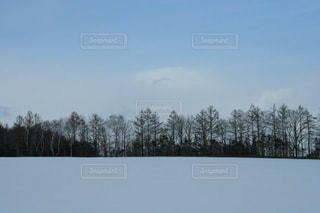 自然,風景,空,冬,雪,青空,北海道,美しい,樹木,旅行,ホワイト,網走,フォトジェニック,インスタ映え