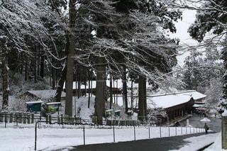 雪化粧した比叡山延暦寺境内までの道のりの写真・画像素材[1732371]