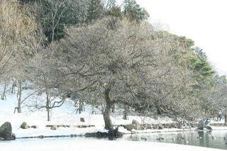 雪化粧した風情ある三島池の写真・画像素材[1732435]