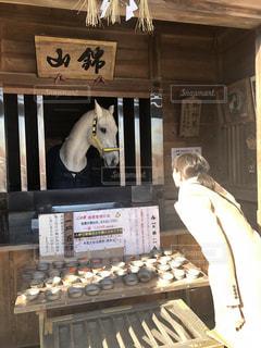 多度大社の白馬と見つめ合う初詣の写真・画像素材[1751688]
