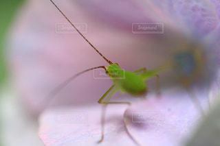 ピンクの花びらに小さな虫の写真・画像素材[1791478]