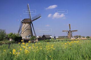 オランダキンデルダイクの風車と菜の花風景の写真・画像素材[1820001]