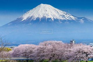 富士山と美しい桜の風景の写真・画像素材[1845953]