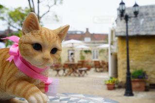カフェの巨大で不思議な可愛いネコの写真・画像素材[2070286]