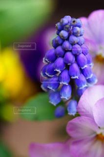 春の休日の快適なガーデニングの写真・画像素材[2072122]