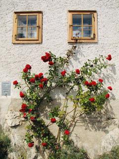 バラが似合うブルージュのおしゃれな壁の写真・画像素材[2246655]