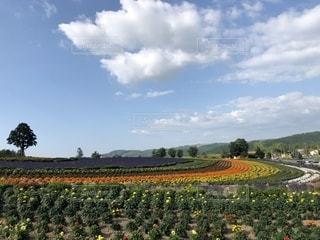 美瑛のふわふわの雲と青空と美しい自然に癒されての写真・画像素材[2283507]