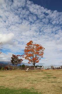 秋空と微笑ましい親子の光景の写真・画像素材[2426271]