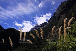 ニュージーランドのススキと晩夏の雲の写真・画像素材[2430613]