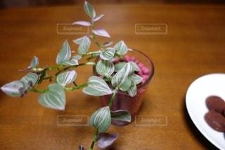 観葉植物に癒される空間の写真・画像素材[2737797]