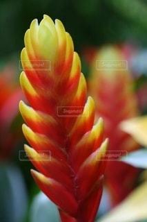 カラフルで神秘的な観葉植物の写真・画像素材[2740269]