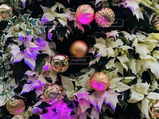 クリスマスツリーの変化する美しい光の写真・画像素材[2825271]