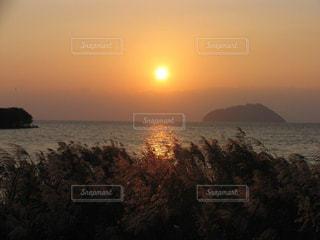 自然,風景,空,秋,夕日,湖,太陽,夕暮れ,光,ススキ,琵琶湖,葦,インスタ映え