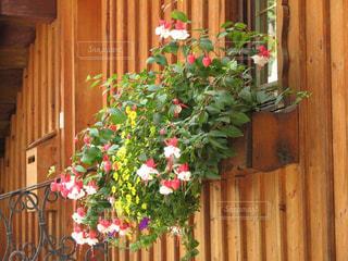 温かい木造外壁に素敵な花の写真・画像素材[2895497]