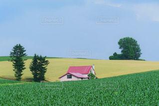 自然に癒される美瑛の丘の写真・画像素材[2985723]