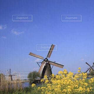 キンデルダイクの菜の花と風車の風景の写真・画像素材[2987387]